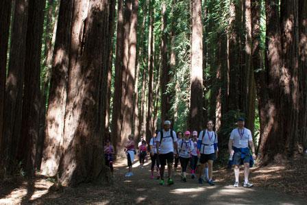 trees 2013 San Francisco Susan G. Komen 3-Day breast cancer walk