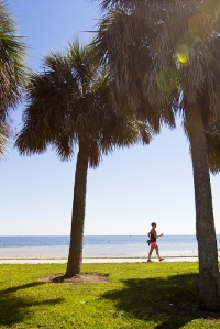 palm tree 2013 Tampa Bay Susan G. Komen 3-Day breast cancer walk