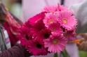 pink flower 2013 San Diego Susan G. Komen 3-Day breast cancer walk