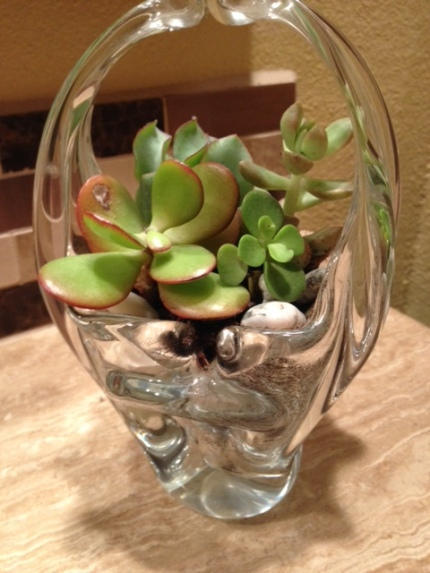 Komen_3day_fundraising_coaches tips_succulents