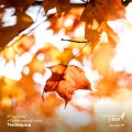 3Day_2017_Social_Fall-02
