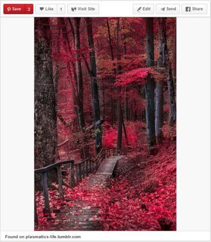 susan g. komen 3-Day breast cancer 60 mile walk blog pinterest portraits of inspiration