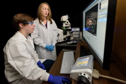 Dr. Kloxin with student Lisa Sawicki in lab looking at breast cancer cells in 3D culture